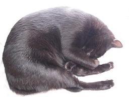 ブログ用丸くなって眠るクー.JPG