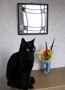 ブログ用玄関の置物猫.jpg