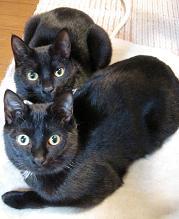 ブログ用黒猫兄弟2011年1月9日.jpg